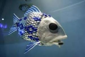 SHOAL robot poisson